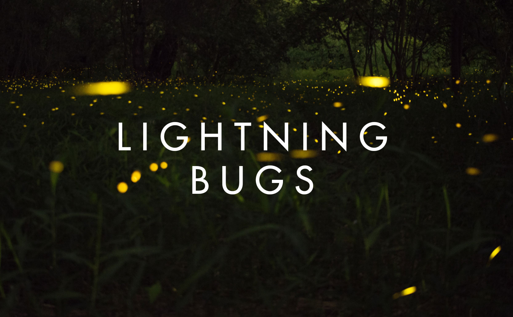 Read more about the article Lightning Bugs