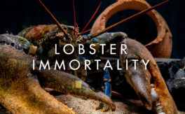 Lobster Immortality