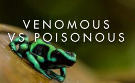 Venomous vs Poisonous