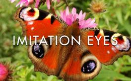 Imitation Eyes