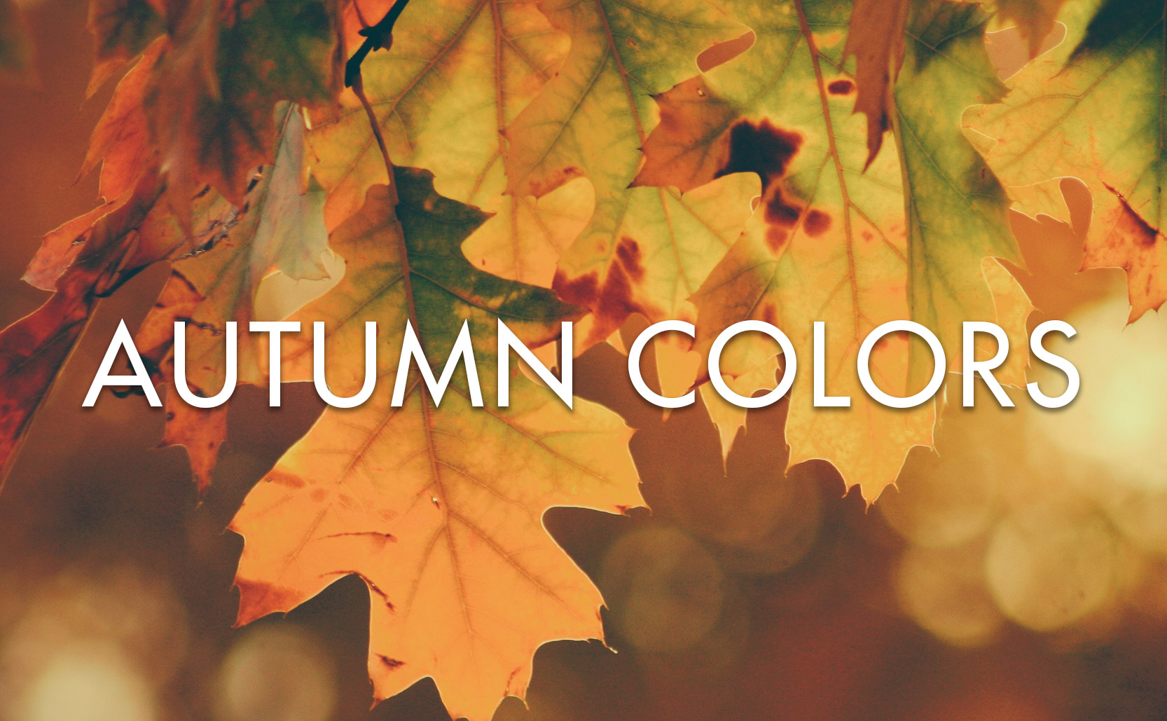 Read more about the article Autumn Colors