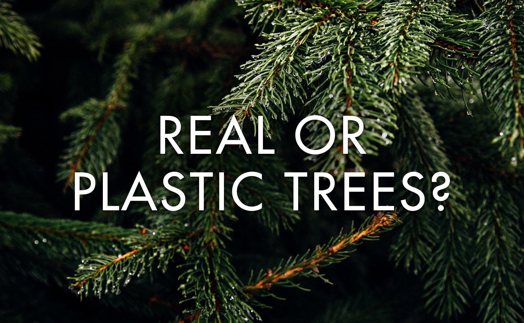 Real or Plastic Trees?