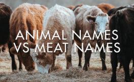 Animal Names vs Meat Names