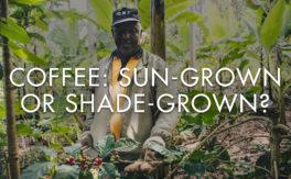 Coffee: Sun-Grown or Shade-Grown?