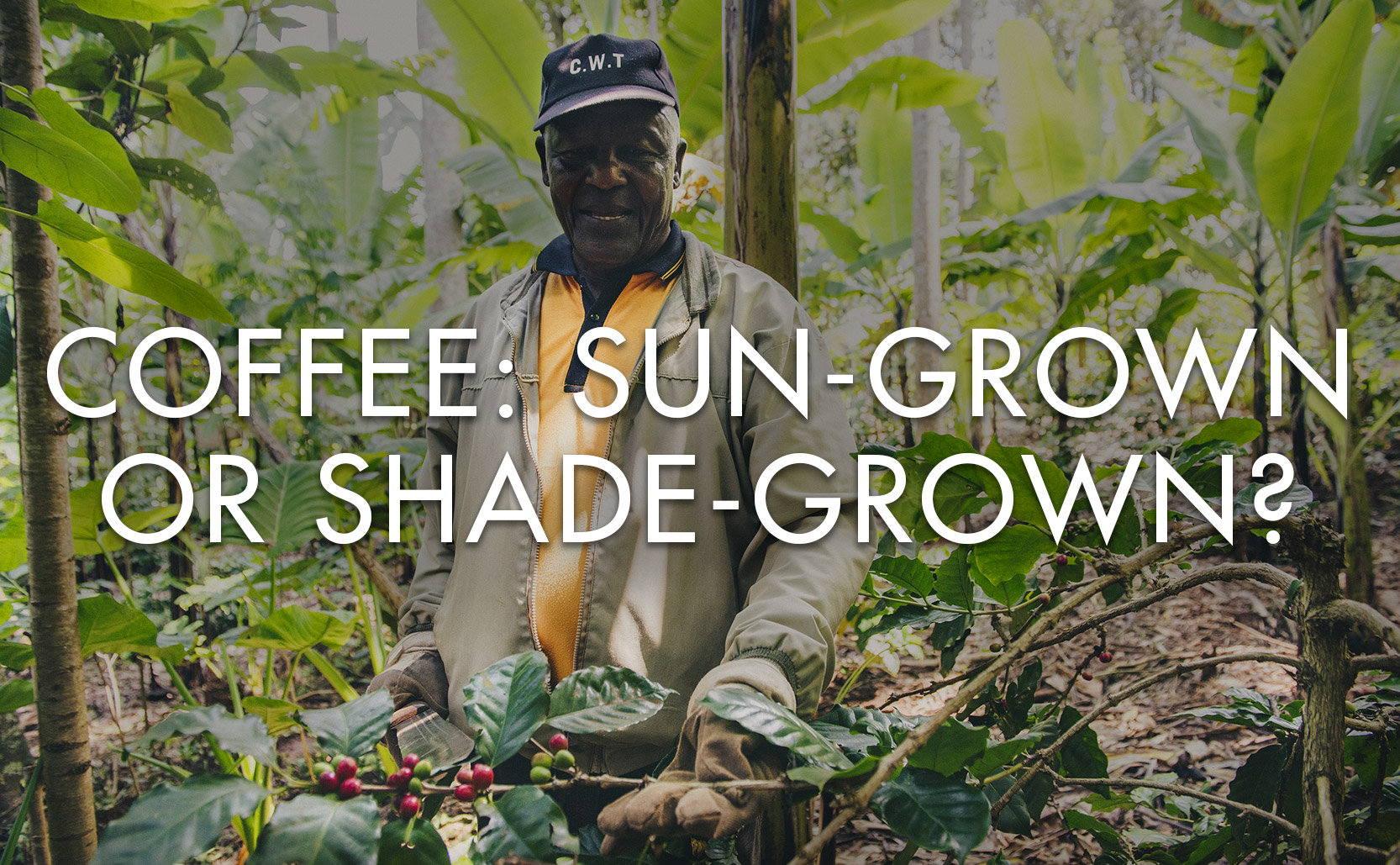 Read more about the article Coffee: Sun-Grown or Shade-Grown?