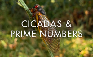 cicadas and prime numbers