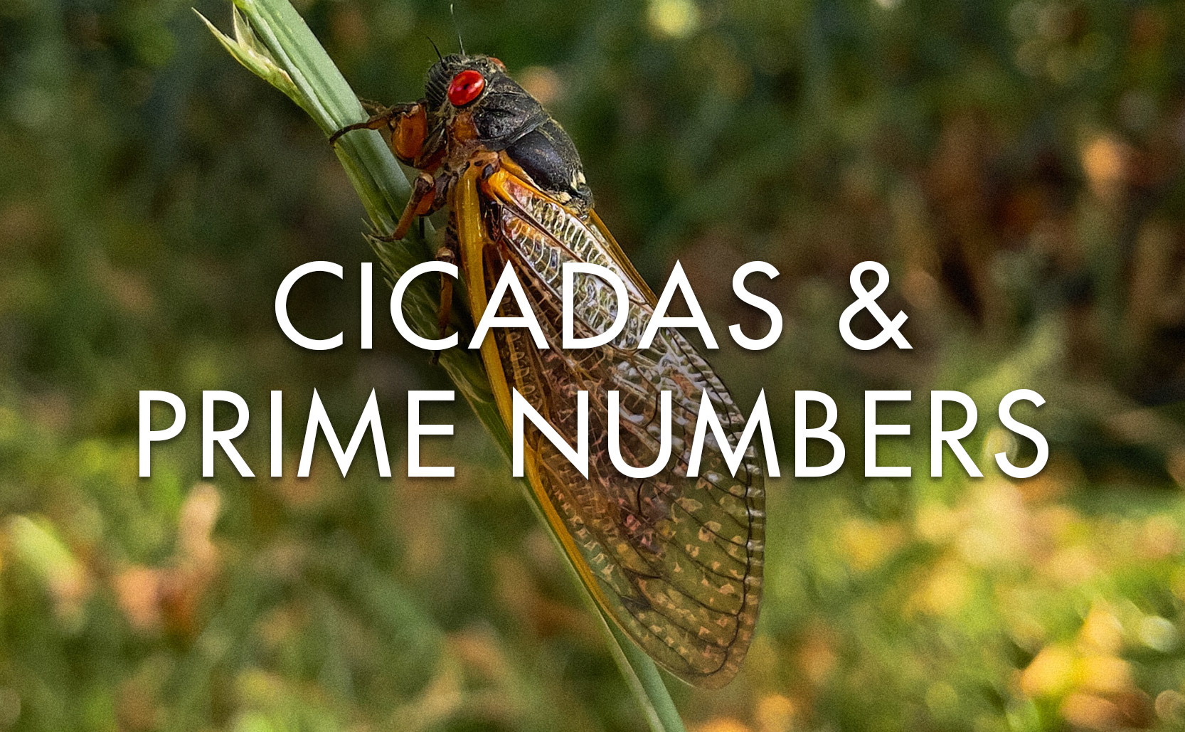 You are currently viewing Cicadas & Prime Numbers