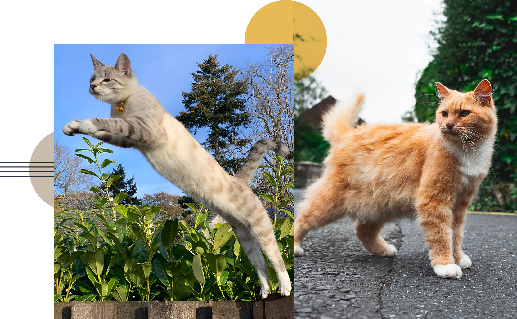 cat jumping fully stretched out, another cat standing with its primordial pouch hanging down