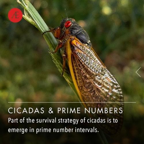 Instagram-post-slider-cicadasandprimenumbers1