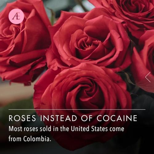 Instagram-post-slider-rosesinsteadofcocaine1