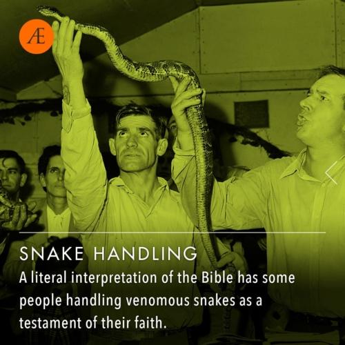 Instagram-post-slider-snakehandlers1